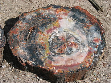 360px-Petrified_wood_closeup_2.jpg